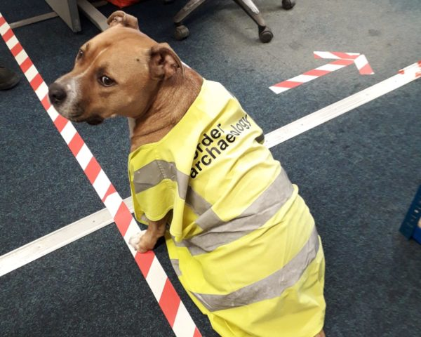 dog in hi vis vest